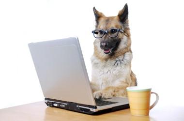 Le chien, meilleur ami de l'Homme et de la réunion !