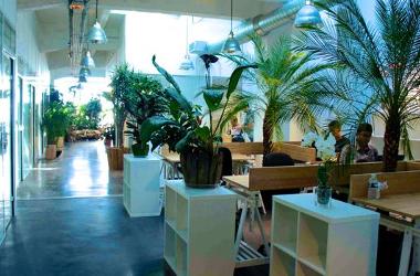 Un espace de coworking inspiré par la nature