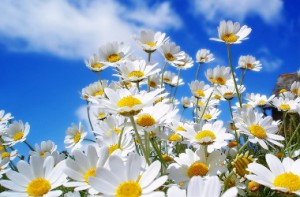 Le printemps arrive dans votre salle de réunion