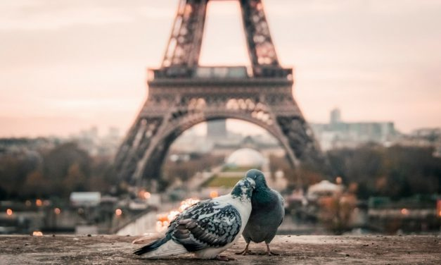 Top salles Bird Office : séminaire à Paris