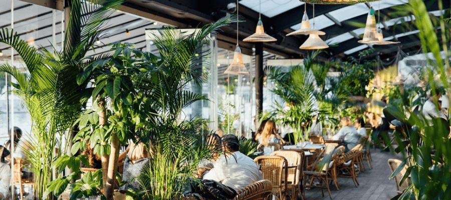 les plantes s'invitent au bureau