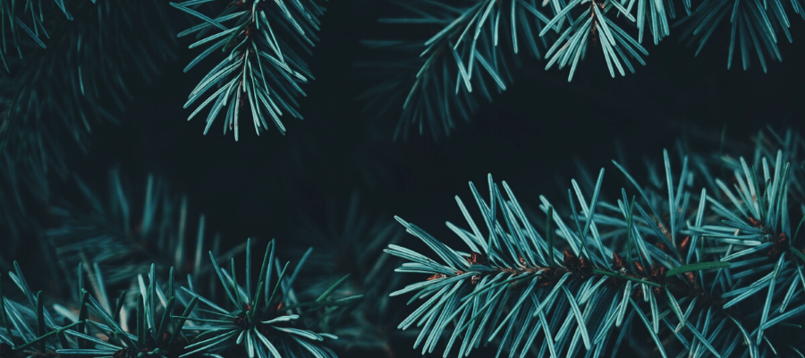 Tendance Noël d'entreprise éco-responsable